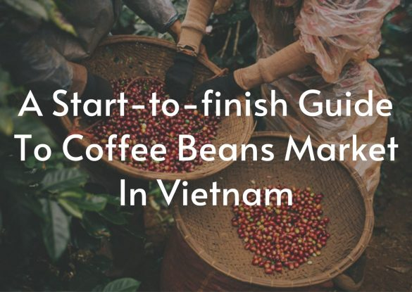 A-Start-to-finish-Guide-To-Coffee-Beans-Market-In-Vietnam