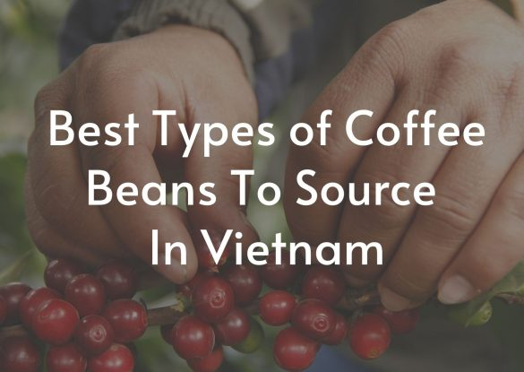 Best-Types-of-Coffee-Beans-To-Source-In-Vietnam