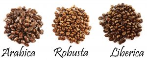 Vietnam is the paradise for Robusta green coffee beans