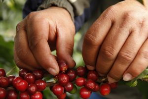 BEST TYPES OF COFFEE BEANS TO SOURCE IN VIETNAM