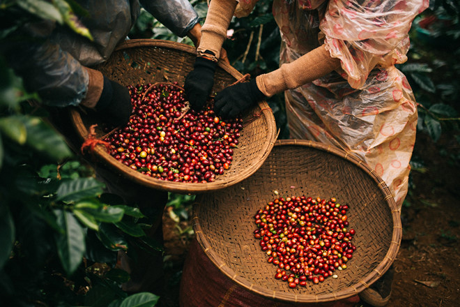 A start-to-finish guide to Vietnam coffee market