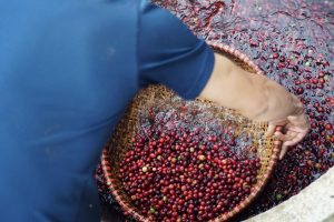 washed-processed-coffee-beans-vietnam-sourcing