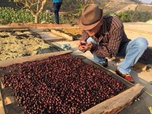 How do Vietnam define its specialty coffee?