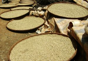 4-common-mistakes-when-sourcing-green-coffee-beans-from-Vietnam