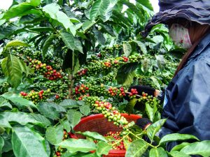 EVERYTHING YOU NEED TO KNOW ABOUT VIETNAM'S SPECIALTY COFFEE