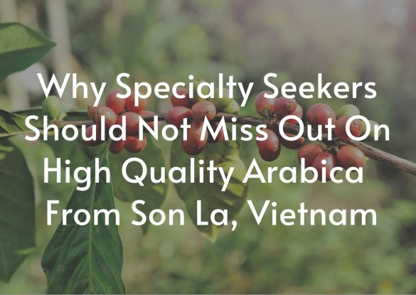 Why-Specialty-Seekers-Should-Not-Miss-Out -High-Quality-Arabica-From-Son La-Vietnam