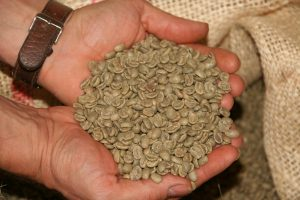 green-coffee-beans-vietnam