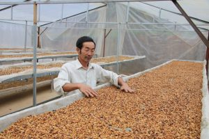 Local's experience in picking and processing Arabica coffee