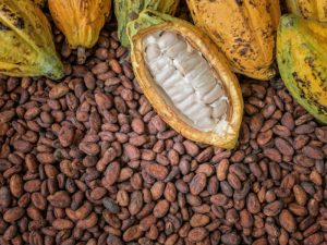 cocoa ingredient in slim coffee